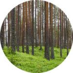 Metsa pilt